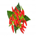 Red bird eye chilli (Dried Kanthari)