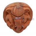 Coconut Ganesh